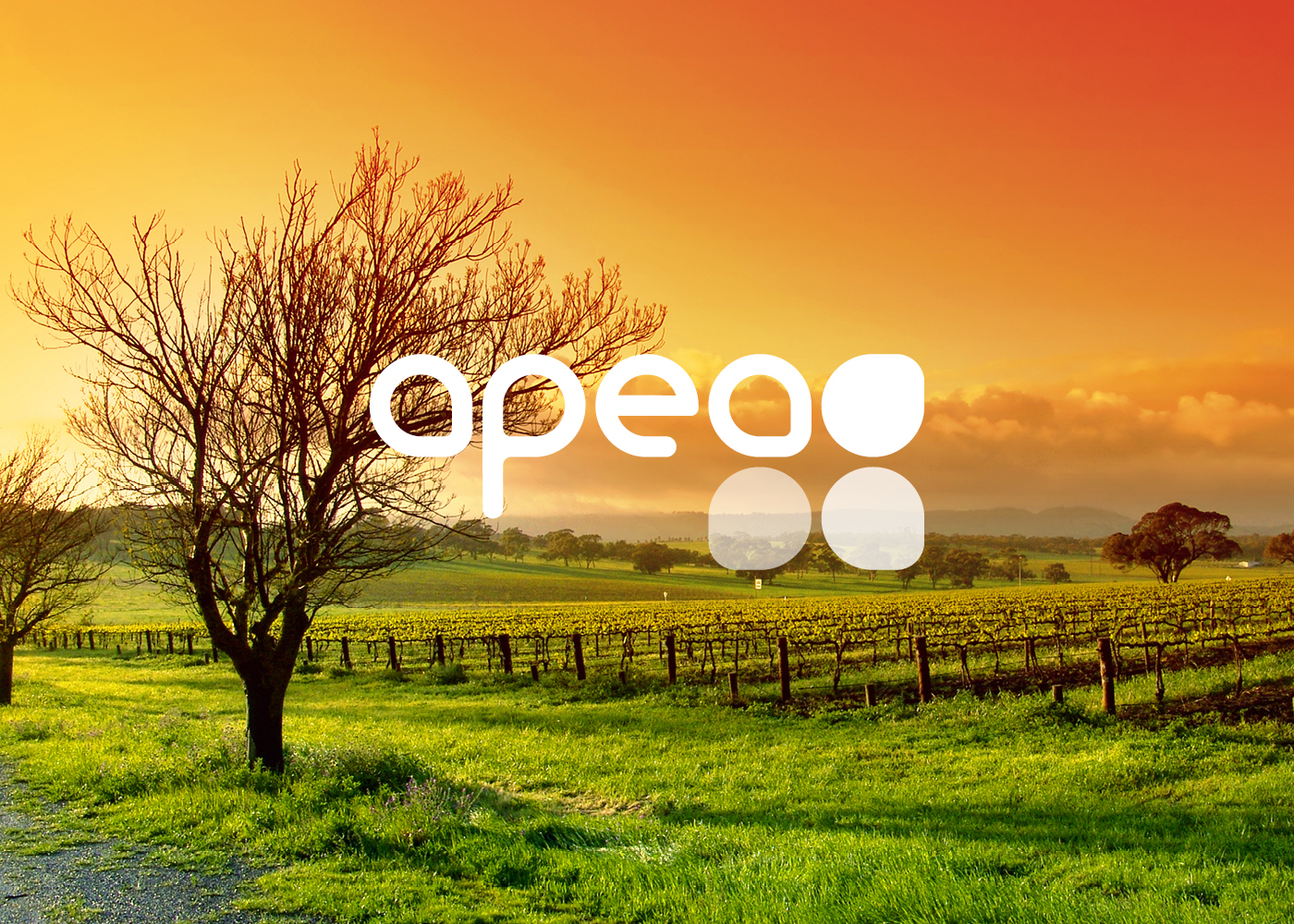 apea_website4